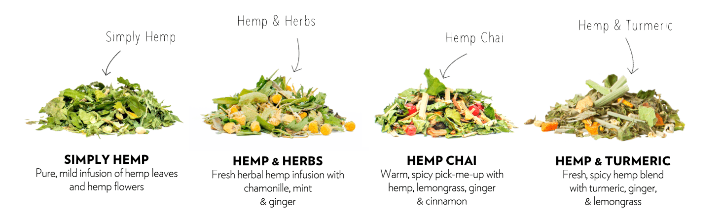 Dutch Harvest hemp tea blends. Pure CBD Hemp, Hemp & Herbs, Hemp Chai and Hemp & Turmeric.