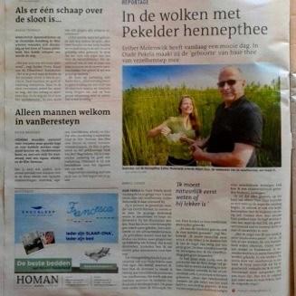 Dutch-Harvest-Hennep-thee-Dagblad-van-het-Noorden