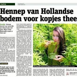 Dutch-Harvest-Hennep-thee-Metro