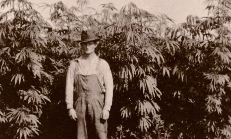 Hemp farmer in front of a hemp field