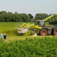 Hemp cultivation hemp field Groningen